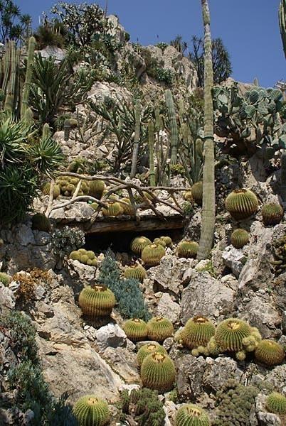 Jardin exotique or exotic gardens monaco tourist spots for Boulevard du jardin exotique monaco