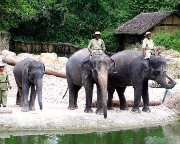 http://www.touristspots.org/wp-content/uploads/2011/03/Singapore-Zoological-Garden-370x297.jpg