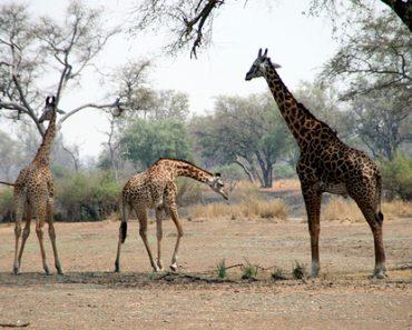 http://www.touristspots.org/wp-content/uploads/2011/07/North-Luangwa-National-Park-370x297.jpg
