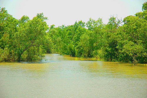 thesis on sundarbans The sundarbans is a network of marine streams, mud shores and mangrove forests the salinity level is higher in the mangroves than in the freshwater swamp forests located further inland.