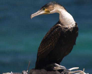 http://www.touristspots.org/wp-content/uploads/2011/08/Djoudj-National-Bird-Sanctuary-370x297.jpg