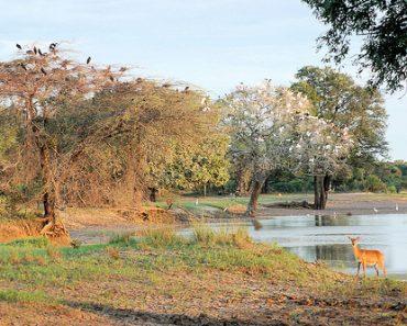 http://www.touristspots.org/wp-content/uploads/2011/08/South-Luangwa-National-Park-370x297.jpg